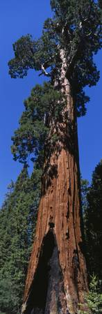 Sequoia National Park CA