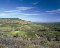 Vineyards on a landscape
