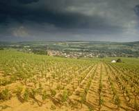 Storm clouds over vineyards