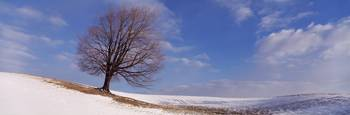View of a single tree on a hill in winter