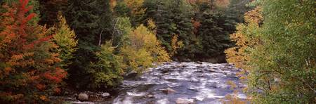 River flowing through a forest Ausable River Adir
