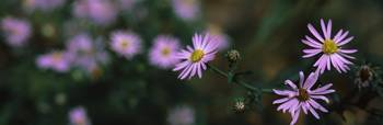 Close up of small purple flowers