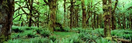Rain Forest Olympic National Park WA