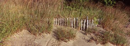 Fence with grass at the lakeside Lake Erie Presqu