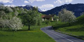 Road w/blooming trees Luzern Switzerland