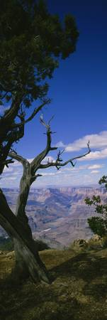 Close-up of a tree at the edge of a canyon