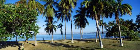 Palm trees on the beach Puerto La Cruz Anzoategui