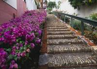Step Street Charlotte Amalie St Thomas US Virgin