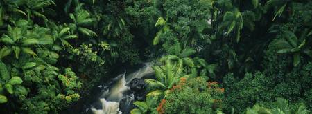 High angle view of a waterfall in a rainforest