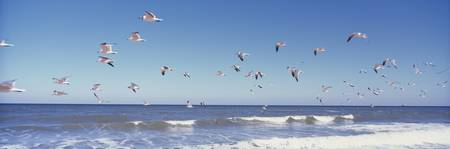 Birds on Beach along Route A1A Atlantic Ocean Nr