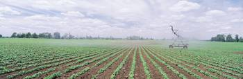 Soybean field being irrigated by an agricultural