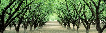 Hazel Nut Orchard Dayton OR