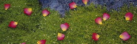 High angle view of rose petals on Irish moss