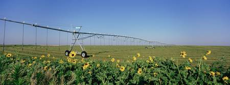 Irrigation in an alfalfa field