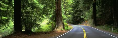Road Redwoods Mendocino County CA