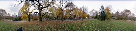 Trees in a park Central Park Manhattan New York C