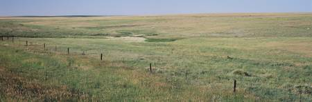 Prairie grass on a landscape