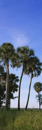 Palm trees on a landscape