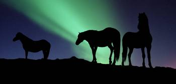 Silhouette of horses at dusk Iceland