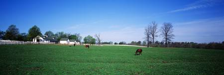 Horse Farm Lexington KY