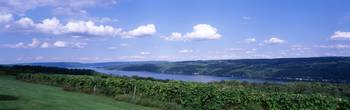 Vineyard Keuka Lake Finger Lakes Region NY
