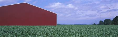 Red Barn Cornfield Yamhill County OR