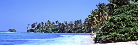 Tropical trees on the beach