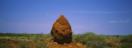 Termite Mound on a landscape