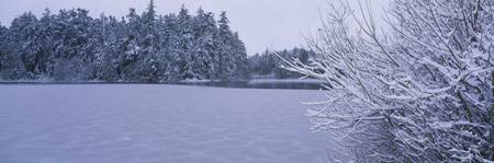 Trees covered with snow along a frozen lake