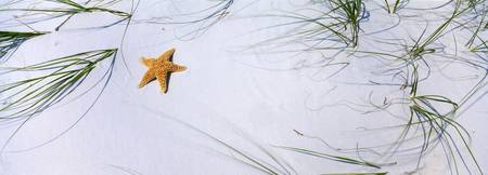 Starfish Beach AL