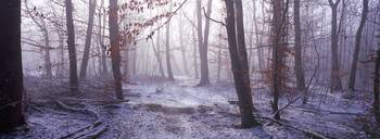 Forest in winter at dawn Bavaria Germany