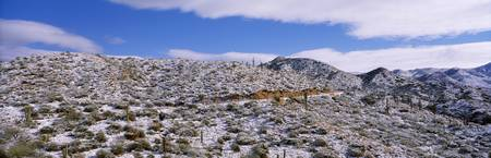 Rare Snow in Desert Tonto National Forest AZ