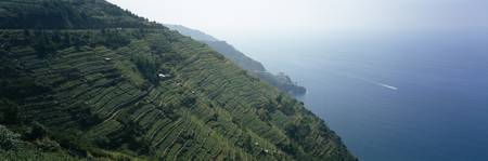 Terraced vineyards at the coast