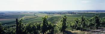Vineyard with a village in the background
