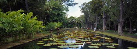 Lily pads in a pond Sir Seewoosagur Ramgoolam Bot