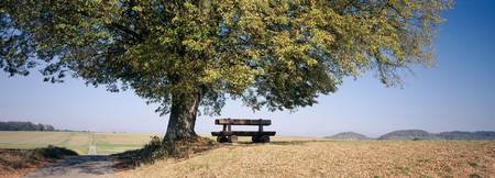 Empty bench under a tree