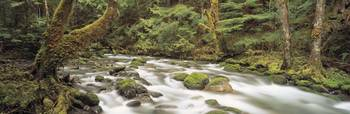 Big Quilcene River Olympic National Park WA