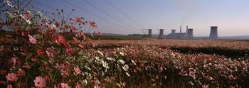 Cosmos flowers in a field with a power station in