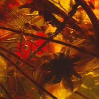 Abstract Plants and Flowers Detail