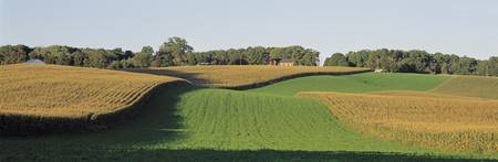 View of a tilled corn field