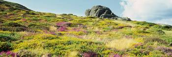 Low angle view of flowers and rocks on a landscap