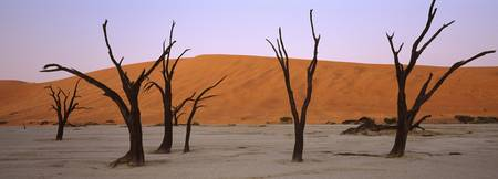 Dead trees in a desert at sunrise Dead Vlei Sossu