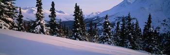 Chugach Mountains Winter Spruce Tree Arctic Valle