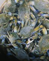 Close-up of crabs (Cancer Pagurus) steaming in a
