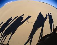 Camel Caravan Shadows