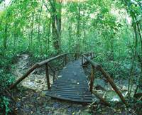 Footbridge Through Rain forest Costa Rica