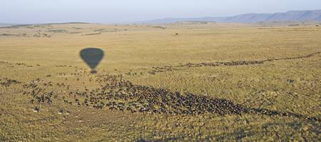 Herd on wild animals migrating