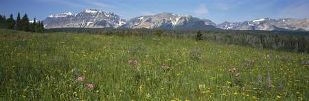 Wildflower Meadow Rocky Mountains MT