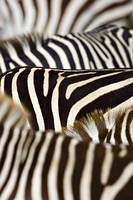 Close-up of stripes on Zebras