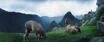 Alpacas Vicugna pacos in a field with mountains i